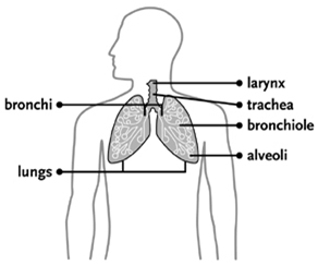 Lung Cancer, Lung Cancer Treatment India, Lung Cancer Symptoms India