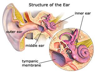 Adult Ear Tube Surgery 44
