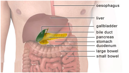 diet after gallbladder removal surgery history