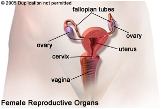 Tubal Ligation Reversal  International Patient Experience India, Tubal Ligation Reversal  Surgeons India