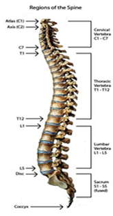 Back Pain Surgery India, Spinal Pain, Back Strain, Spinal Stenosis, Information On Back Pain