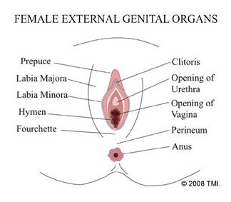 Vaginoplasty Labioplasty