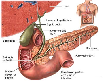 Gall Bladder Diseases offers info on Gall Bladder Diseases Treatment India, Gall Bladder Disease India