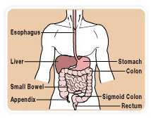 Pancreatic Surgery offers info on Pancreatic Cancer Surgery India, Pancreatic India, Pancreatic India