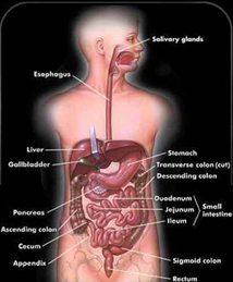 Colon Polyp Removal Surgery India,Cost Colon Polyp Removal Hospital