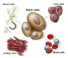 Stem Cell Therapy India offers info on India Stem Cell Therapy India, Low Cost Stem Cell Therapy India, Avascular Necrosis Stem Cell Therapy India