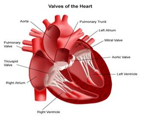 Heart transplantheart transplant surgery indiacost heart transplant heart surgery india india surgery heart transplant india best price india surgery heart transplant ccuart Choice Image