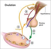 Ovulation Induction India|Ovulation Induction Cost India